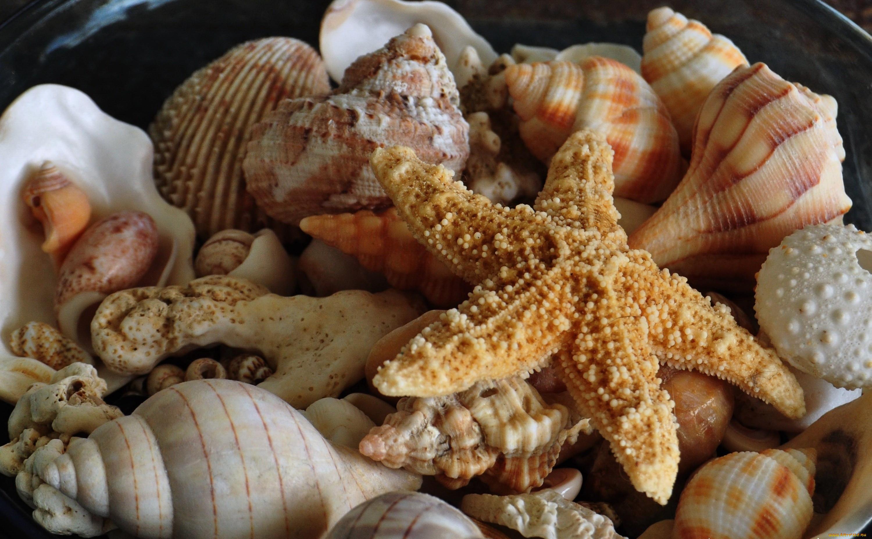 Ракушки фотографии морские